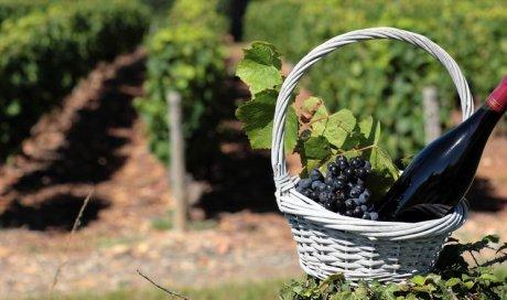 Fournisseur de vins pour traiteur